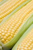 kolby kukurydzy Zdjęcia Royalty Free