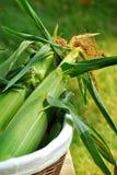 kolby kukurydzy Fotografia Royalty Free