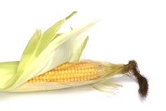 kolby kukurydzy Zdjęcie Stock