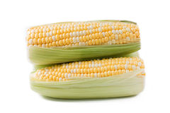 kolby kukurydzy Obrazy Royalty Free