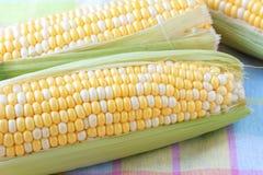 kolby kukurydzy Obrazy Stock