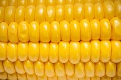 kolby kukurydzy fotografujący tła white Zdjęcia Royalty Free