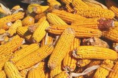 kolby kukurydzy fotografujący tła white Obraz Royalty Free
