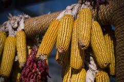 kolby kukurydzy fotografujący tła white Zdjęcie Royalty Free