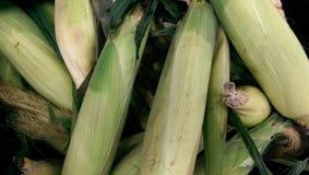 kolby kukurydzy fotografujący tła white Obrazy Stock