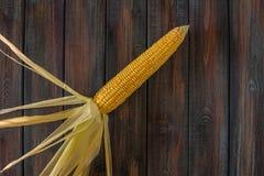 kolby kukurydzy fotografujący tła white Słodka kukurudza na stole Zdjęcia Royalty Free