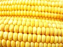 kolby kukurydzy złota fotografia royalty free