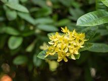 Kolca kwiat Zdjęcia Stock