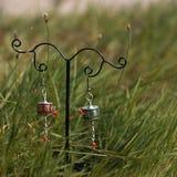 Kolczyki na stojaku na zielonej świeżej trawie Zdjęcia Stock