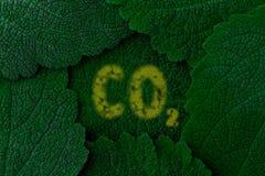 KoldioxidCO2 bakgrundsdark - greenleaves close upp Arkivfoton