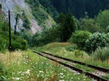 kolei przerośnięty toru Zdjęcia Stock