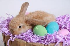 kolejna Wielkanoc zdjęcie Obraz Royalty Free