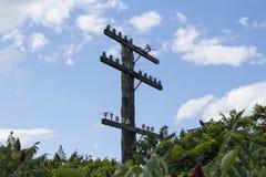 Kolejowe linie energetyczne Fotografia Stock