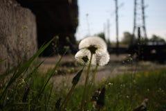 Kolejowi kwiaty Zdjęcie Royalty Free