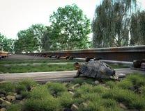 Kolejowy ślad krzyżuje wiejskiego krajobraz i żółwia Obraz Stock