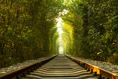 Kolejowy tunel drzewa Zdjęcia Stock