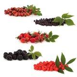 kolekci dziki owocowy Zdjęcia Royalty Free