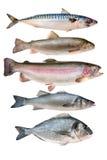 kolekci ryba Obraz Stock