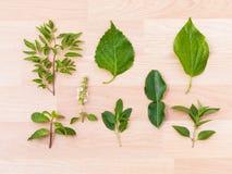 Kolekci zielony gorący, korzenny tajlandzcy karmowi składniki i, zdrowie Zdjęcie Royalty Free