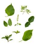 Kolekci zielony gorący, korzenny tajlandzcy karmowi składniki i, zdrowie Fotografia Stock