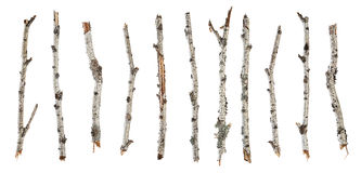 Kolekcj gałąź sucha brzoza odizolowywająca na bielu Zdjęcie Royalty Free