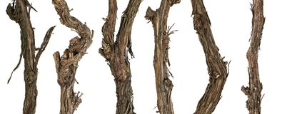 Kolekcj suche gałąź winograd Zdjęcia Stock