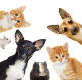 Kolekcj zwierzęta domowe Fotografia Royalty Free