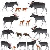 Kolekcja łosie amerykańscy także wymieniał łosie i swój lisiątka w colour wizerunku ilustracji
