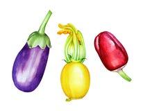 Kolekcja akwareli ręki rysujący warzywa Obraz Stock