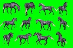 Kolekcja arabskie końskie pozy obrazy royalty free