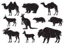 Kolekcja dzikie zwierzęta na białym tle ilustracji
