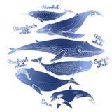 Kolekcja graficzni wieloryby royalty ilustracja