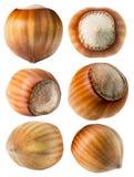Kolekcja hazelnuts odizolowywający na białym tle zdjęcia stock