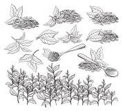 Kolekcja herbaciani liście Zdjęcia Royalty Free