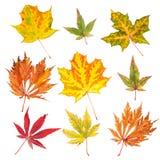 Kolekcja jesień liść zdjęcia royalty free
