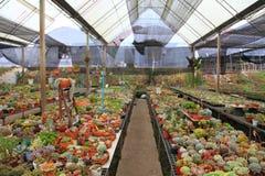 Kolekcja kaktusa, sukulentu ogrodowa szklarnia dla suchej rośliny i obraz royalty free
