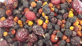 Kolekcja Karpackie jagody zbiory wideo