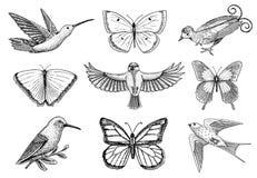 Kolekcja kolorowi motyli insekty i ptaki Entomologiczny symbol wolność grawerujący ręka rysujący rocznika nakreślenie ilustracja wektor