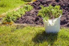 Kolekcja krajowi warzywa marchewka i seler fotografia stock