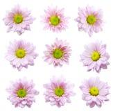 Kolekcja kwiat na białym tle Zdjęcia Royalty Free