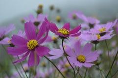Kolekcja kwiaty Zdjęcie Royalty Free