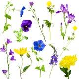 Kolekcja kwiaty Obrazy Royalty Free