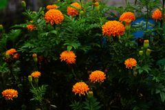 Kolekcja kwiaty Zdjęcie Stock