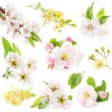 Kolekcja kwiaty owocowi drzewa Zdjęcia Royalty Free