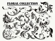 kolekcja kwiecista ilustracji