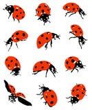 Kolekcja ladybirds obrazy royalty free