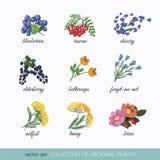 Kolekcja lecznicze rośliny 5 ilustracja wektor