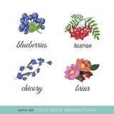 Kolekcja leczniczy plants2 ilustracji