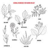Kolekcja najlepszy ziele dla oparzenie reliefowych royalty ilustracja