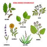 Kolekcja najlepszy ziele dla oparzenie reliefowych ilustracja wektor